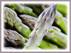 Captivating edible Asparagus officinalis (Asparagus, Garden Asparagus), 13 July 2017