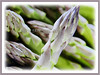 Asparagus officinalis (Asparagus, Garden Asparagus)