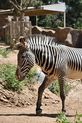 san diego zoo group 3 DSC_0652