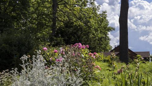 Random Garden Along Dundas Street 02