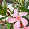 #flower #macro #fl #fb