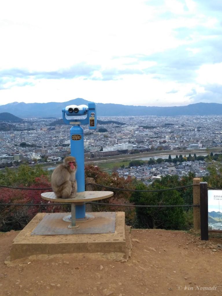 Arashiyama kyoto monkey