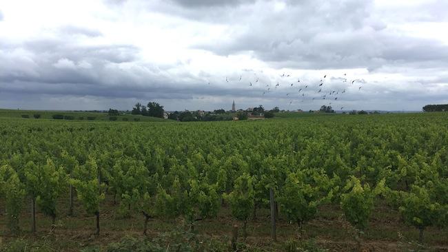 À la découverte de Bergerac et de St Émilion (sans aimer, ni y aller pour le vin)