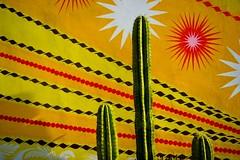 Cactus Color Pop // Nicaraguan Series