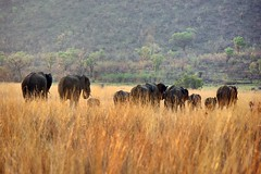 Elephant retreat