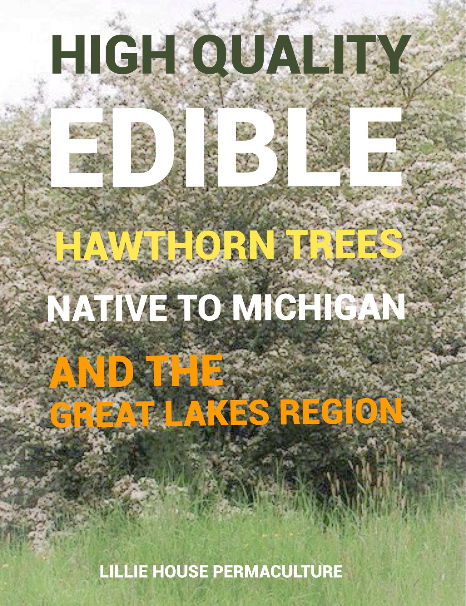 High Quailty Edible Native Hawthorns for the Great Lakes Region