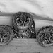 3 Wise Owls