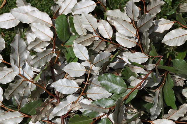 Mille feuilles