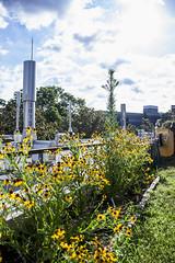 062617_GEOL rooftop garden_02