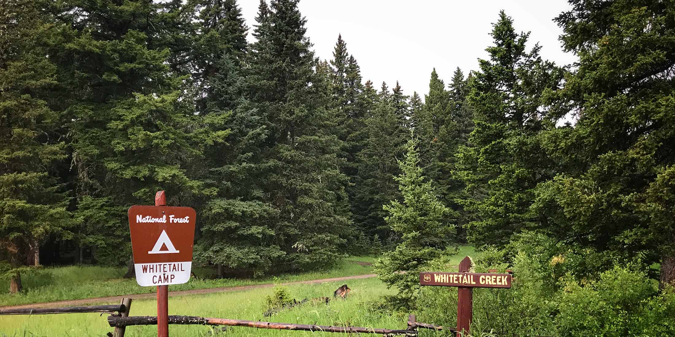 Information about Whitetail Campground located in the Little Belt Mountain Range, Montana.