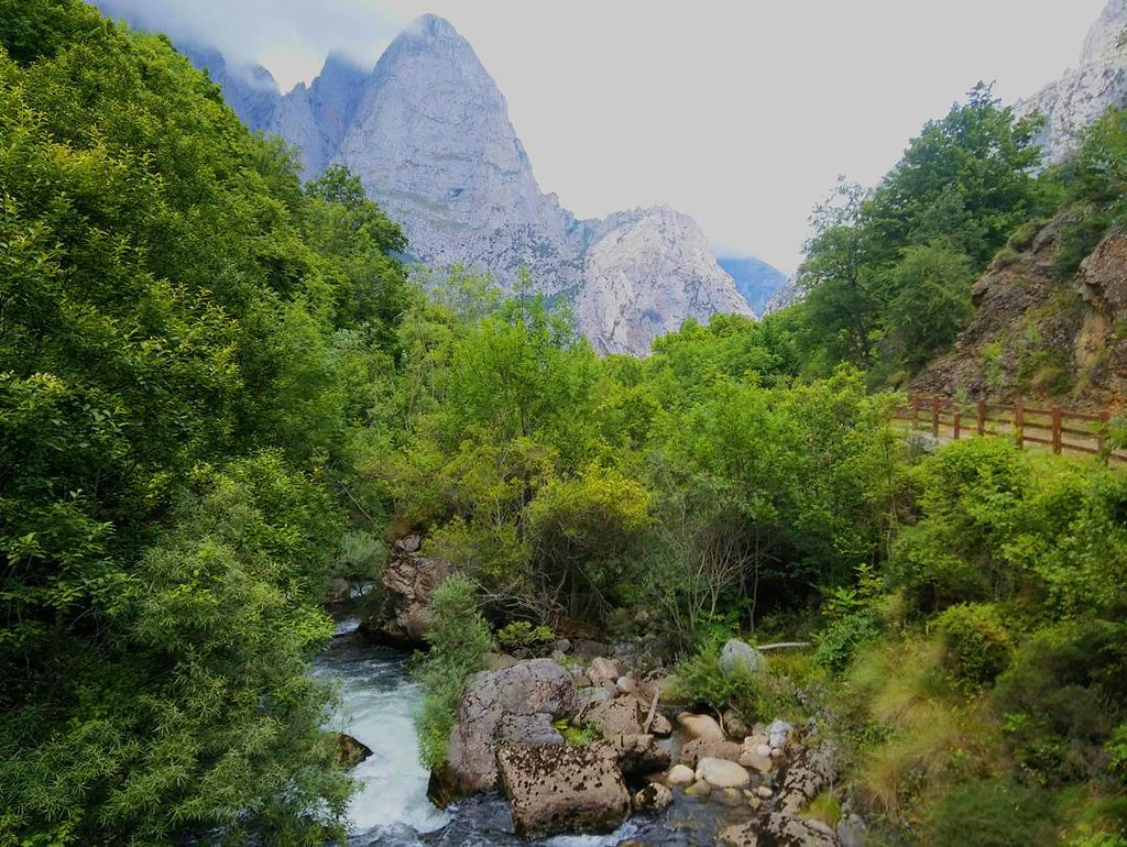 Nature. #photography #phonephoto #picosdeeuropa #riocares