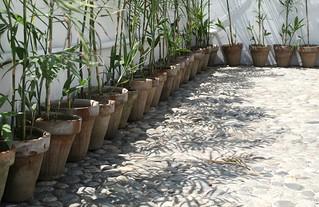 rows and shadows, Islamabad, Pakistan