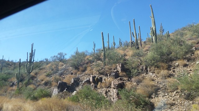 Cactus on US-93