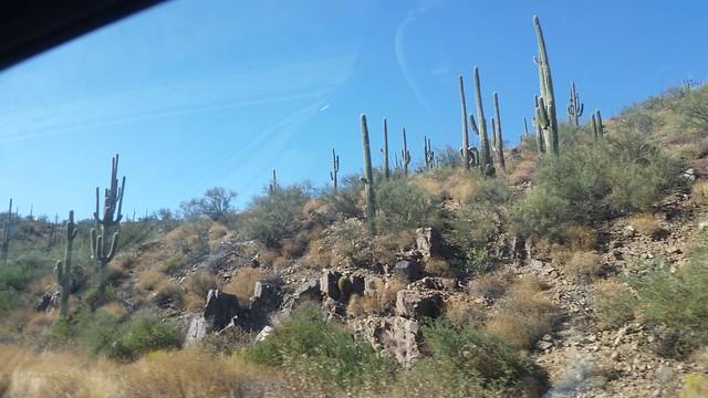 Cactus on US-93