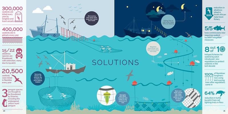 bycatch_solutions © BirdLife International