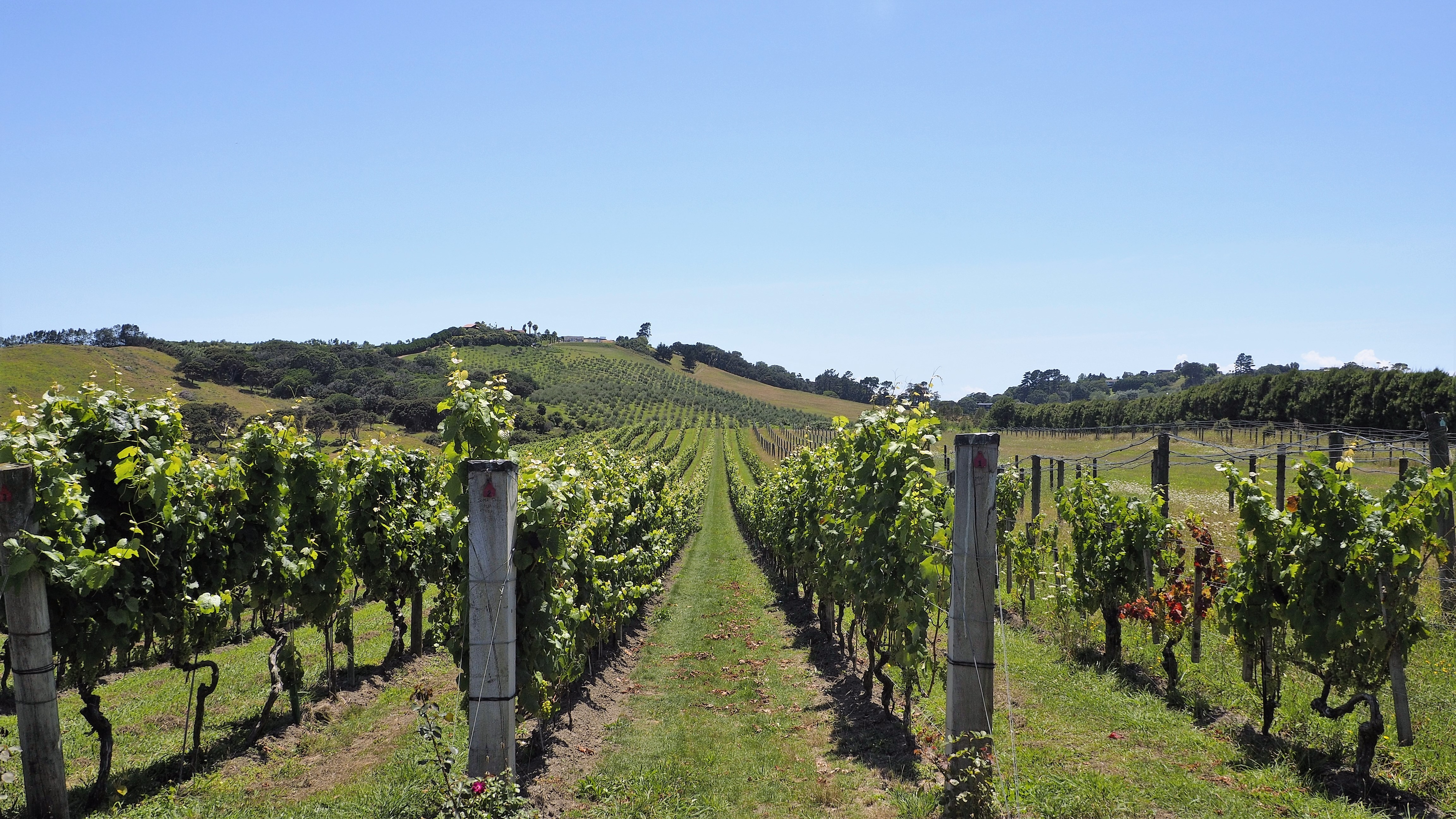 Stonyridge_Vineyard