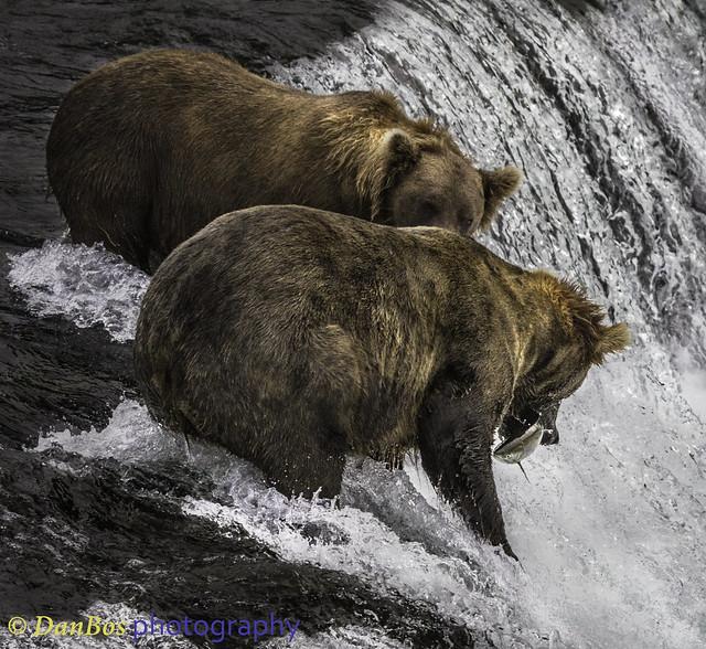"""Bears: """"Wellcome"""""""