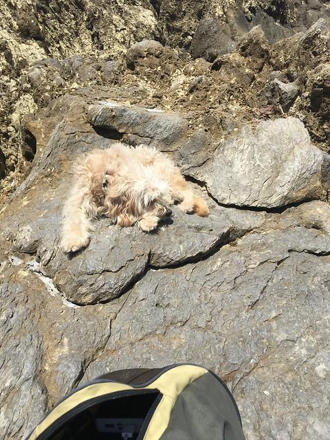 Durmiendo sobre la roca