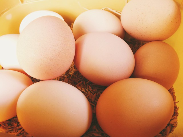Fresh eggs from our free range native chickens.