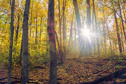 landscape trees forest sun sunrise fall autumn d5200 nikon