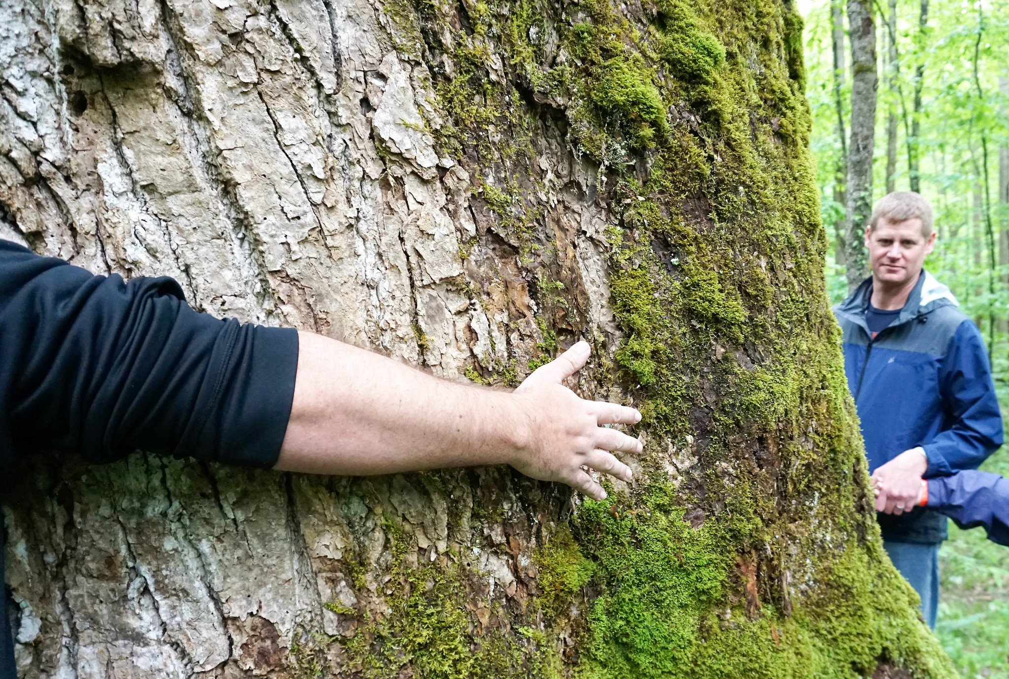 Tree Hugging - Great Smoky Mountains National Park - Sugarlands Distilling Blogger Trip, Gatlinburg, Tenn., May 5 -7, 2017