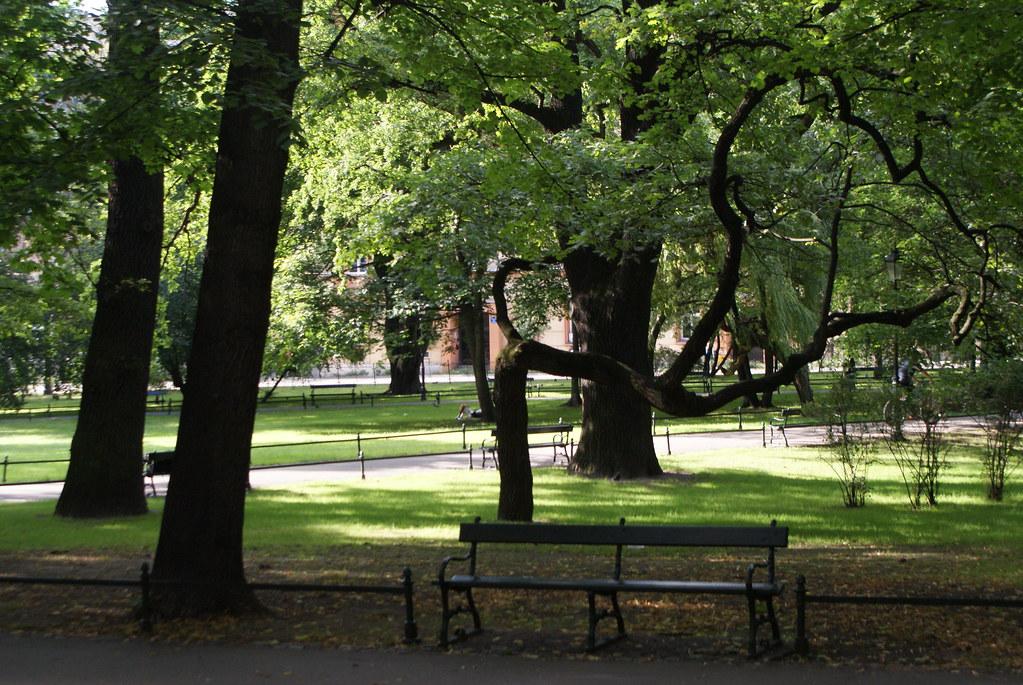 Arbres des Planty à Cracovie : Différentes essence est des beaux arbres aux formes parfois curieuses.