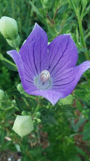 마당밭 아침꽃구경: 꽃잠
