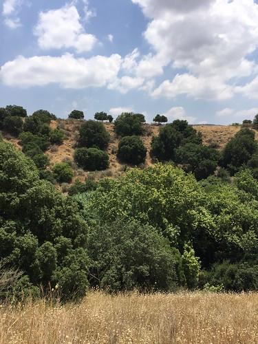 Golan - Banias