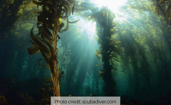 scuba diving california