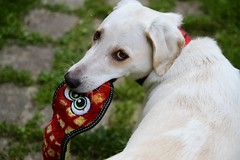 Calla and the snake