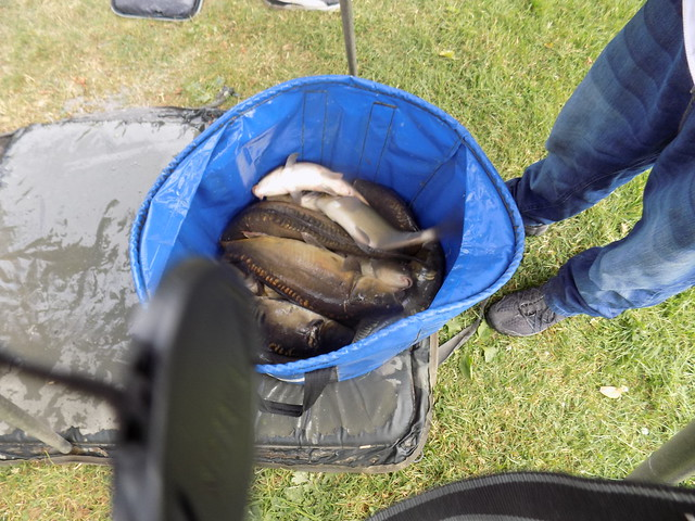 alfie mobbs memorial trophy 8/7/17, alvechurch fishery 35798067876_a3f920d318_z