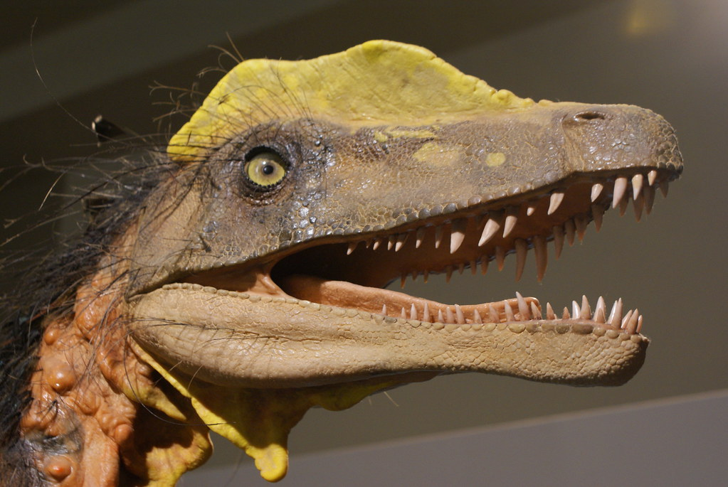 Musée d'histoire naturelle de Bratislava.