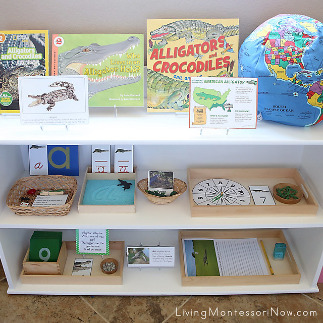 Montessori Shelves with Alligator-Themed Activities