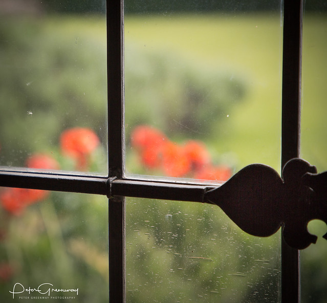 Impressions Of Poppies Through A Leaded Window