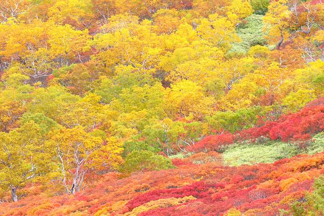 大雪山(黒岳)_0003