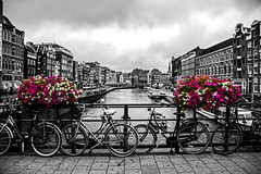 Amsterdam Colourful Flowers