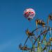 Balloons and Ferris Wheel