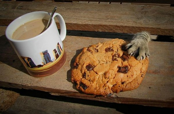 I prefer chocolate-catnip cookies.