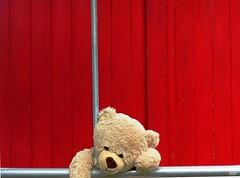 🐻 ©LIM -  Teddy's Adventures