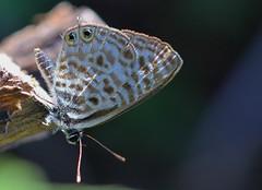 South Africa - Butterflies & moths