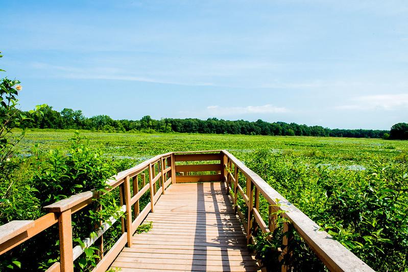 Boot Lake Nature Preserve - July 4, 2017