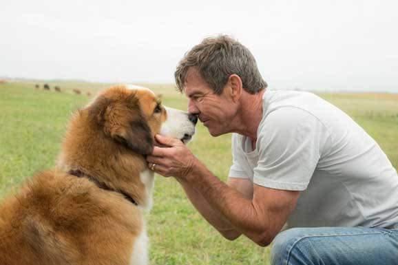 一條狗的使命,只為與你相遇