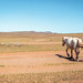 mongolia 2017-026.jpg by vzrjvy