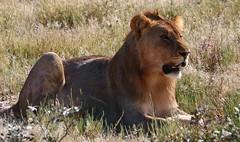 Namibian Mammals