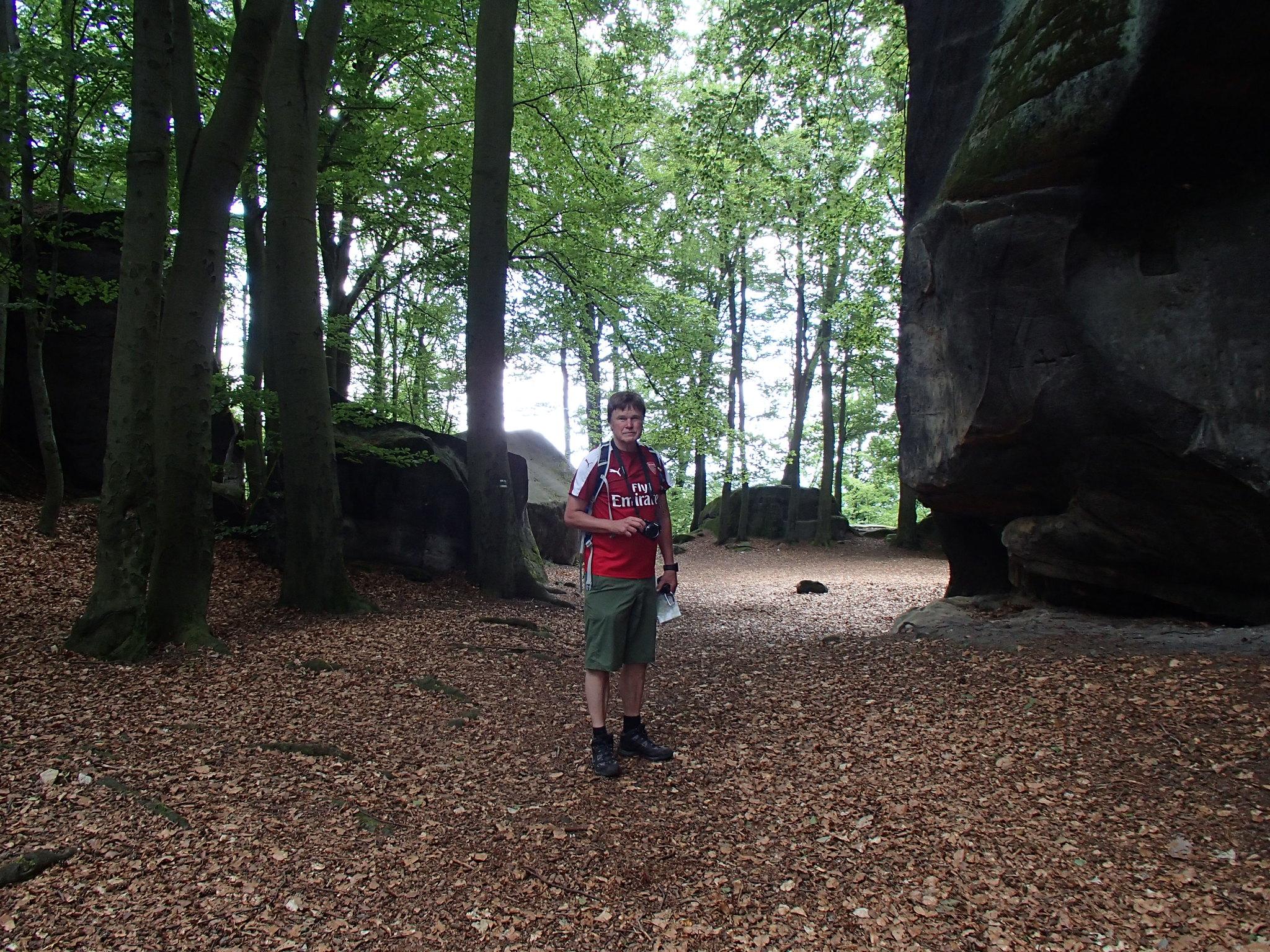 In i bokskogen