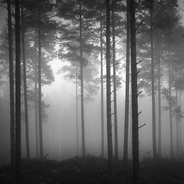 In the Pines II