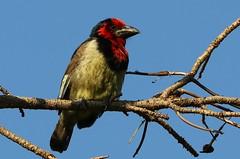 South Africa - Birds