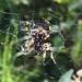 spider por ikarusmedia