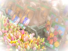 Amsterdam Flowermarket