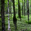 La forêt où est né mon arrière-grand-mère...!!!